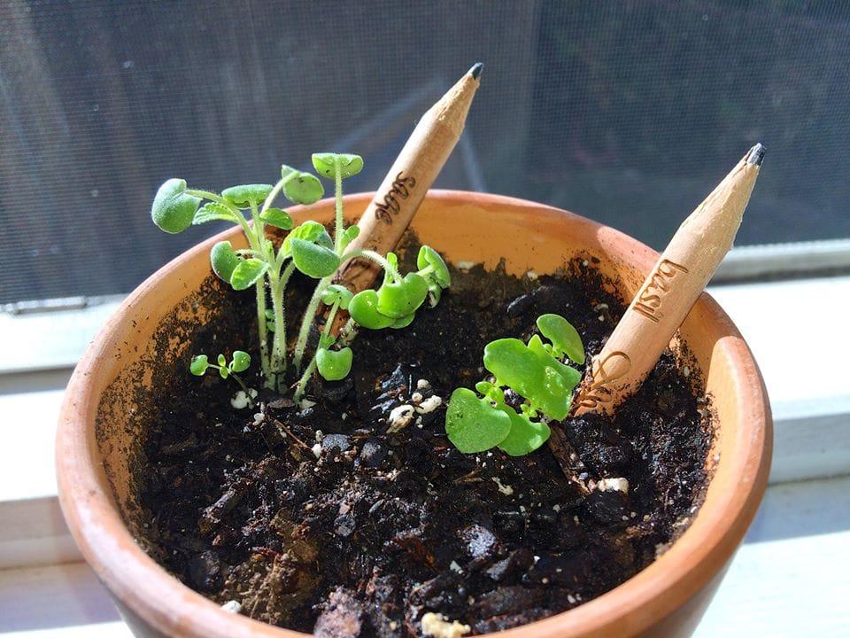 Matita Sprout Piantabile