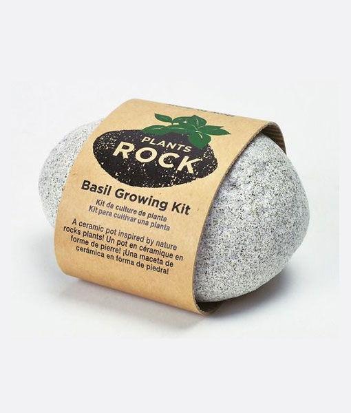 Preventivo Plants Rock