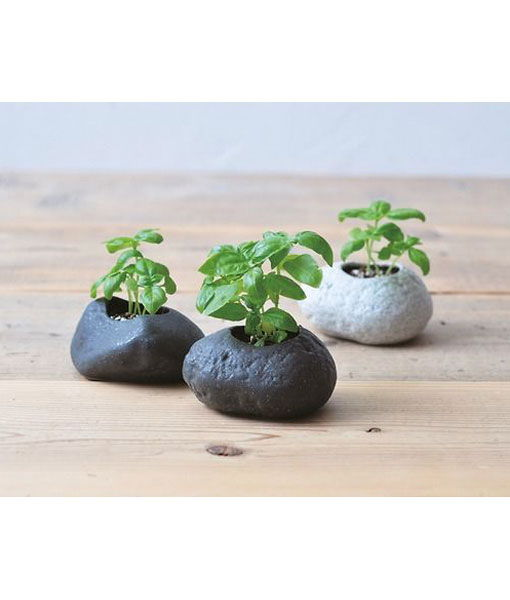 Plants rock crea il tuo giardino zen verde vivendo for Crea il tuo giardino