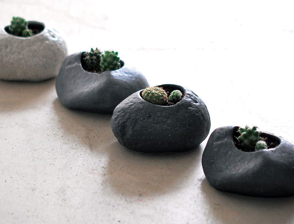 Plants rock - set cactus - giardino zen