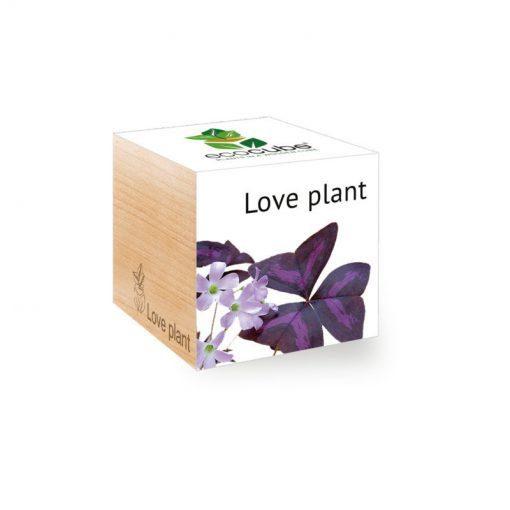Love Plant ecocube
