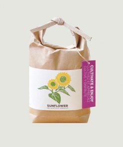 Sunflower Cultivate Enjoy