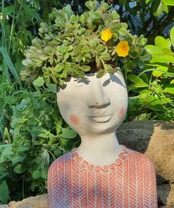 Testa vaso kokedama Succulenta