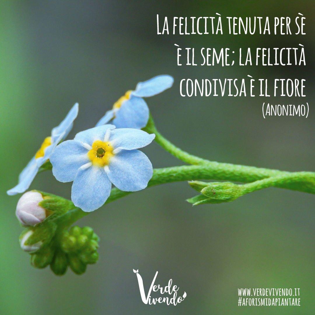 La felicità tenuta per sè è il seme; la felicità condivisa è il fiore  (Anonimo)