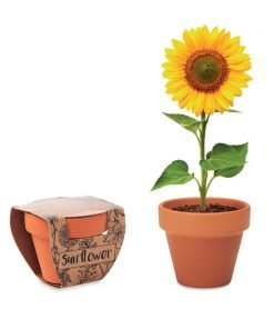 Vasi di terracotta con semi (girasole, papavero, non ti scordar di me)