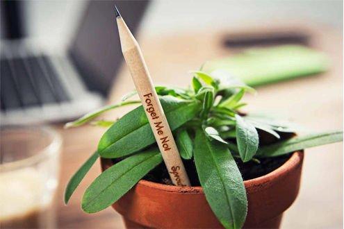 Matita piantabile con seme Verde Vivendo
